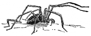 spider-crawling