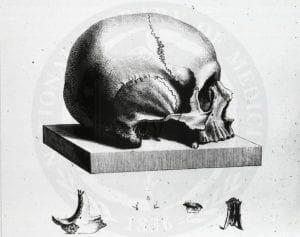halloween_skull