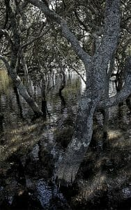 into the muddy mangroves 2